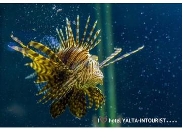 Отель Ялта-Интурист | Океанариум